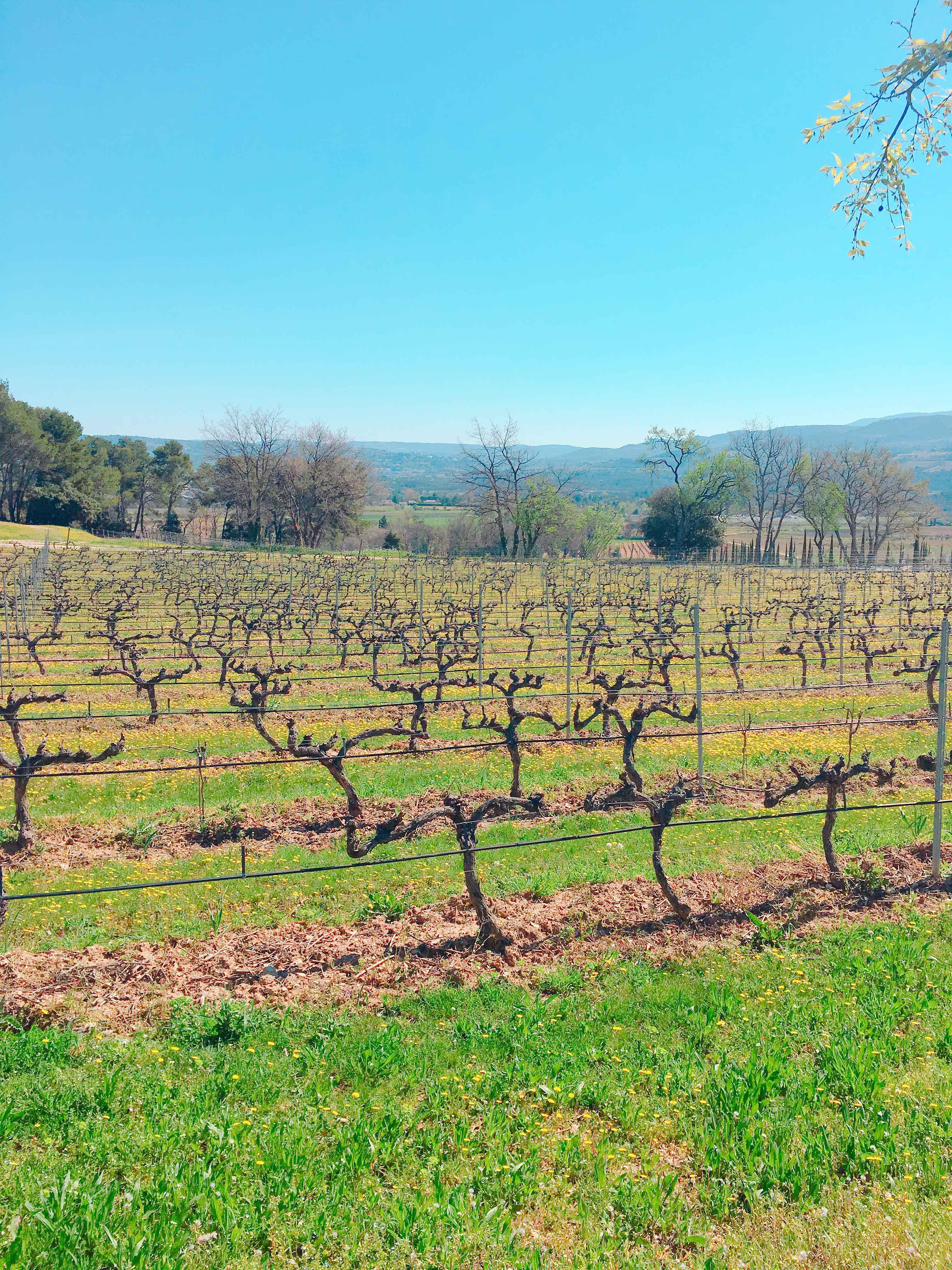 vignes-provence